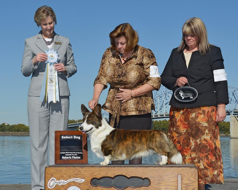 Select Dog: GCH TORETH SUNSHINE'S HERE BE DRAGONS
