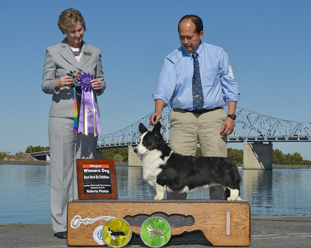 Winners Dog, Best Bred-by Exhibitor: AFARA AGAINST THE WIND